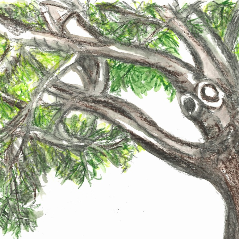 Sketch - tree watercolor pencil
